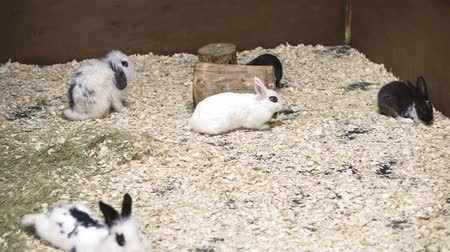 pelyhes : small decorative rabbits are sitting in the aviary
