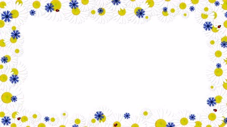 quadro : Floral frame (Chamomiles and Cornflowers) + alpha