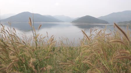 baraj : grass flowering near dam Stok Video