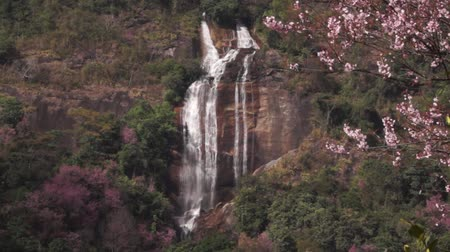 Siriphum waterfall with Wild Himalayan Cherry Wideo