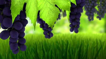 szőlőművelés : Animation 3d of wine grapes.