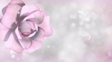 Background with roses. 3d Animation. Time-lapse.