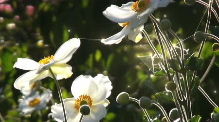 White Flowers With Flowing Motion