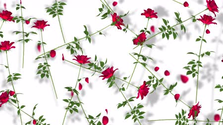 Red Roses On White Background. Rendering floral seamless looping.