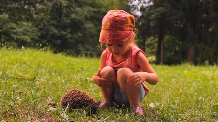 еж : little girl and hedgehog on green grass, the child tries to consider pet prickly hedgehog