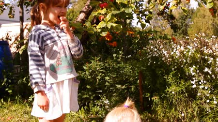 bufê : two girls in the garden under the Apple tree consider the apples on the branches