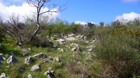 pinus : Rocky soil in the mountains, where trees grow. Flowers and trees in Montenegro.