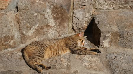 Cats in the old town of Budva, Kotor, Dubrovnik. Croatia and Montenegro.
