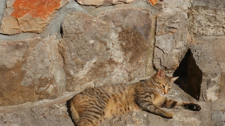 normandiya : Cats in the old town of Budva, Kotor, Dubrovnik. Croatia and Montenegro.