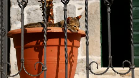 bolyhos : The cat sleeps in a flower pot.