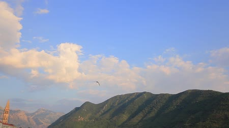 flying sea gull : Seagull flying in the sky. Montenegro, Adriatic sea