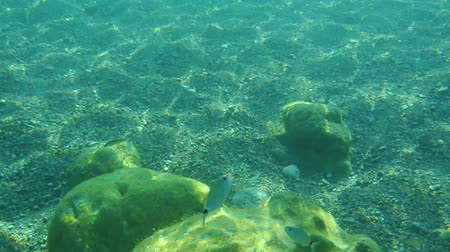 truta : Sea bottom under water. Waters of the Adriatic, Montenegro. Texture of the seabed, floating fish and marine life.