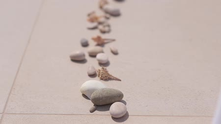 linha de costa : Sea pebbles and shells lined up in a row on the tile. Vídeos