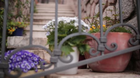 houseplant : Flowers Osteospermum in a brown clay pot on the stairs and forged railing. Plants of Montenegro.
