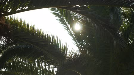 hamak : Sunlight flashing through a branch of a palm tree.