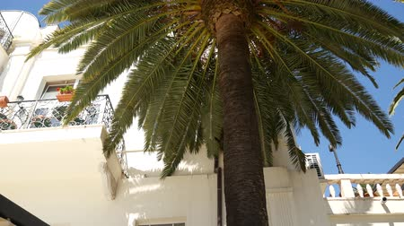 nyaraló : A huge white multi-storey estate in palm trees. Herceg Novi, Montenegro.