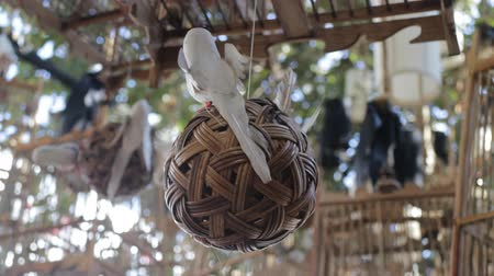 defunct : Lifeless concept decorated items on the tree, stock video
