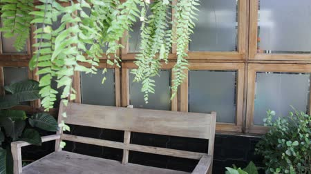 ferns : Wooden bench seat in home garden, stock footage