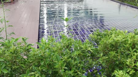 Green garden border of swimming pool, stock footage