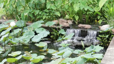 Garden waterfall in landscaped oriental garden, stock footage