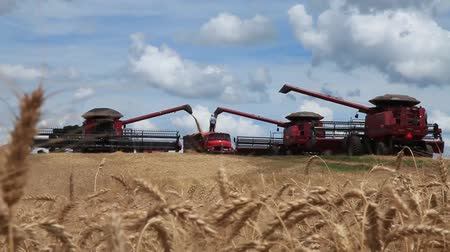 backgroundpictures : HARVESTERS DOWNLOAD BY TRUCK Stock Footage