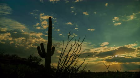 low lighting : Saguaro Cactus Sunset - A motion control sunset time lapse in Saguaro National Park. Stock Footage