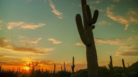 kaktusz : Western Cactus Sunset - Motion control time lapse sunset in Saguaro National Park.
