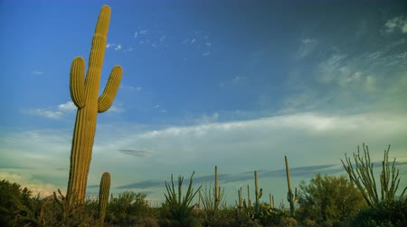 low lighting : Western Cactus Time Lapse - Saguaro cactus timelapse in the American west.