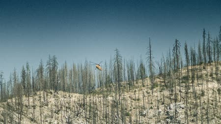 repülőgép : Logging Helicopter - A yellow helicopter logs dead limber in a California forest. Stock mozgókép
