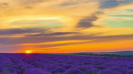 Time Lapse Of Sunset Over A Field Of Lavender.