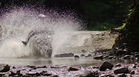 enduro : Enduro Motocycle Rider Crosses Mountain River Splashes of Water and Dirt. Slow Motion. Stock Footage