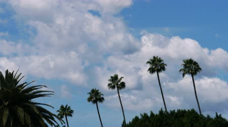 árvores : Time lapse footage with zoom in motion of fast moving cloudscape over palm trees in Los Angeles Vídeos