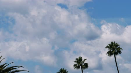 atmosphere : Time lapse footage with zoom out motion of fast moving cloudscape over palm trees in Los Angeles