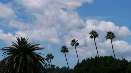 luz do dia : Time lapse footage with tilt down motion of fast moving cloudscape over palm trees in Los Angeles