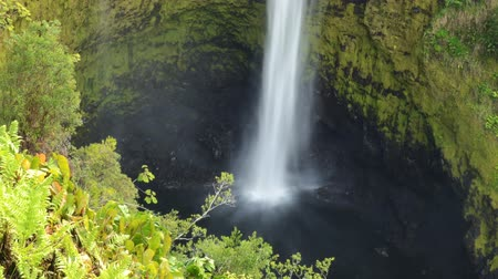 sagrado : Time lapse footage of sacred Akaka Falls in Hilo Vídeos