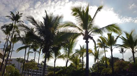 nedvesség : Time lapse footage with tilt down motion of sun shining through tropical palm trees at a resort hotel in Hawaii