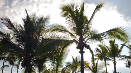 nedvesség : Time lapse footage with pan left motion of sun shining through tropical palm trees at a resort hotel in Hawaii