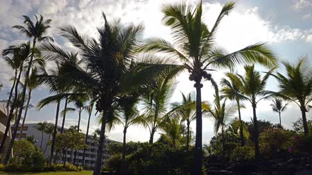 nedvesség : Time lapse footage with tilt up motion of sun shining through tropical palm trees at a resort hotel in Hawaii