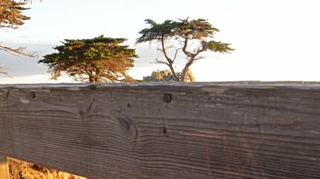 convés : Motion Controlled Dolly Time Lapse of Lone Cypress in Monterey -Pan Right-