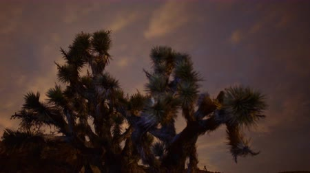 alpes : 4K Motion Controlled Dolly Time Lapse of Milky Way & Joshua Tree -Zoom Out-