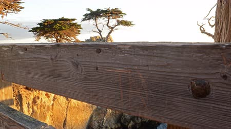 центральный : 4K Motion Controlled Dolly Time Lapse of Lone Cypress in Monterey -Pan Right- Стоковые видеозаписи