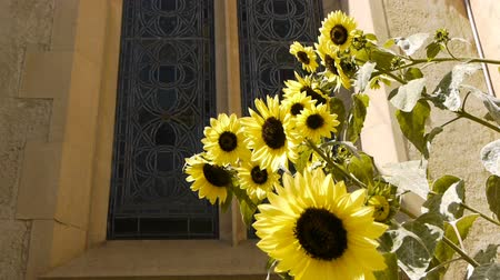 подсолнухи : Sunflower and Stained Glass