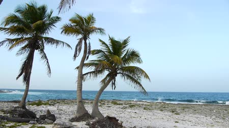luksus : Tropical Beach and Palm Trees