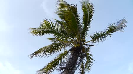 reves : Tropical Palm Tree