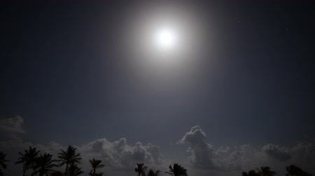światło : Tropical Moon Light Night Time Lapse Tilt Down Wideo