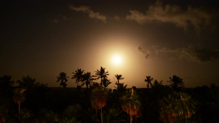 klidný : Tropical Moon Light Night Time Lapse Tilt Up Dostupné videozáznamy