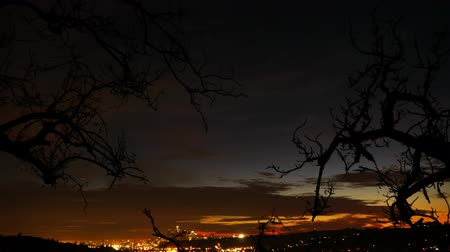 fari : LA City Lights Time Lapse con Tree Silhouette Panoramica verso il basso Filmati Stock