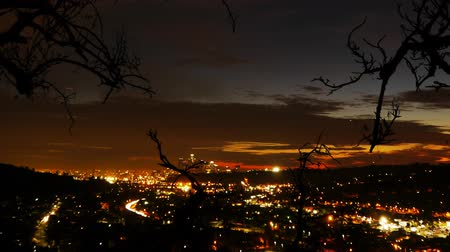 silhouet : LA City Lights Time Lapse met boom silhouet Zoom In