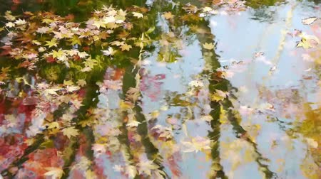 reflexão : Japanese Maple Trees under water with Reflection