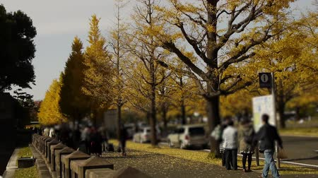 turné : People walking through Yellow Ginkgo Tree in Japan